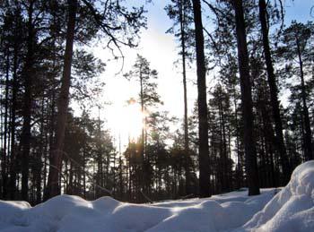 Lapland Daybreak